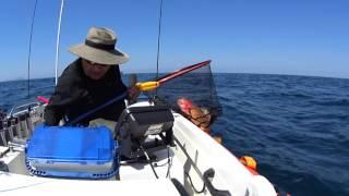 2週続けてのオフショア釣行行って来ました。 赤潮も収まってたんですが…イルカ達の運動会開催中で 青物もアオリも鯛ちゃんも・・・激渋でし...