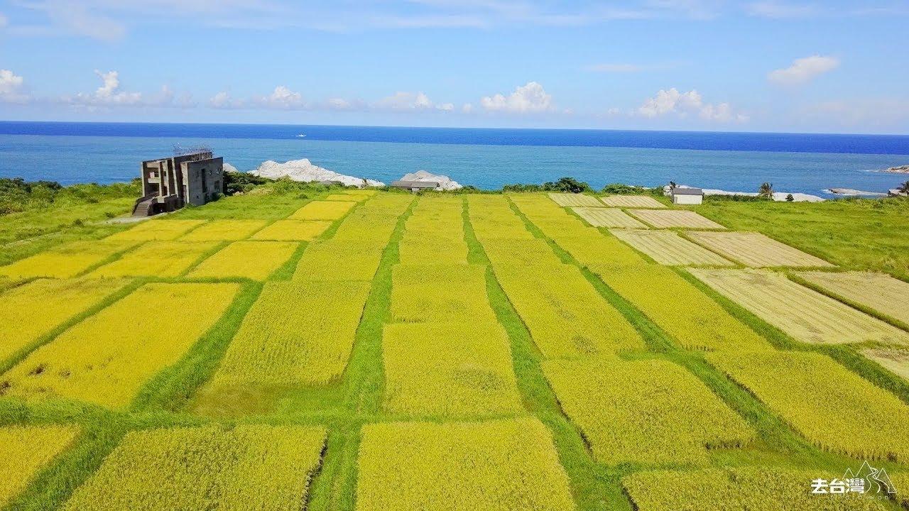去花蓮梯田 海邊種黃金稻米 看稻浪打韆鞦 - YouTube