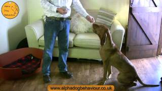 Clicker Training. An Introduction By Nick Jones Ma Of Alpha Dog Behaviour Ltd