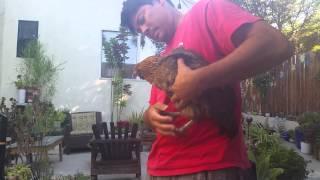 Emptying a Chicken