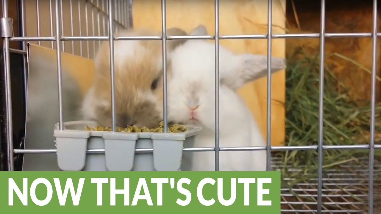 Baby Bunnies Enjoying A Snack Will Melt Your Heart YouTube - 28 cute baby animals will melt heart