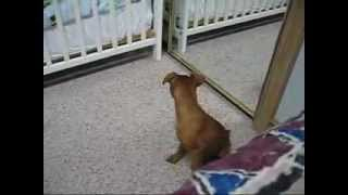 Hey, There's A Min Pin In The Closet!