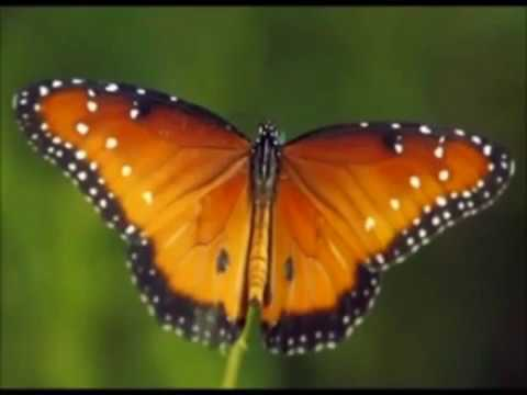 david arkenstone - papillon (on the wings of the butterfly)