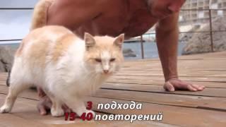 Отжимания для резкости удара кота) силы и взрывной силы