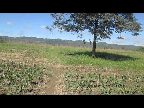 Monkayo farm video 4