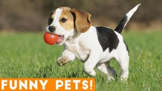 Funniest Dogs of the Week Compilation March 2018   Funny Pet Videos