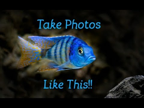 3 Simple Tips To Take Amazing Photographs Of Your Fish, Hint: You Don't Need An Expensive Camera