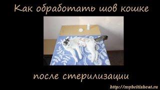 Как обработать шов кошке