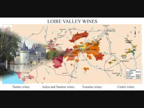 10 Essential Wines & Grapes Part 4 - SAUVIGNON BLANC