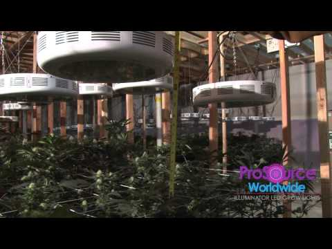 prosource-worldwide-guide-for-led-grow-lights