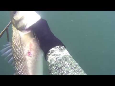 Spearfishing In North Wales Vol. 1