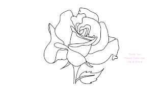 line drawing flower rose draw easy sketch drawings paintingvalley