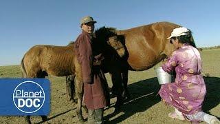 Genghis Khan. Nomadic Desert | Culture - Planet Doc Full Documentaries