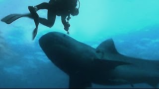 15ft. Tiger Shark Attacks and Chases Diver to Surface (Never before filmed)