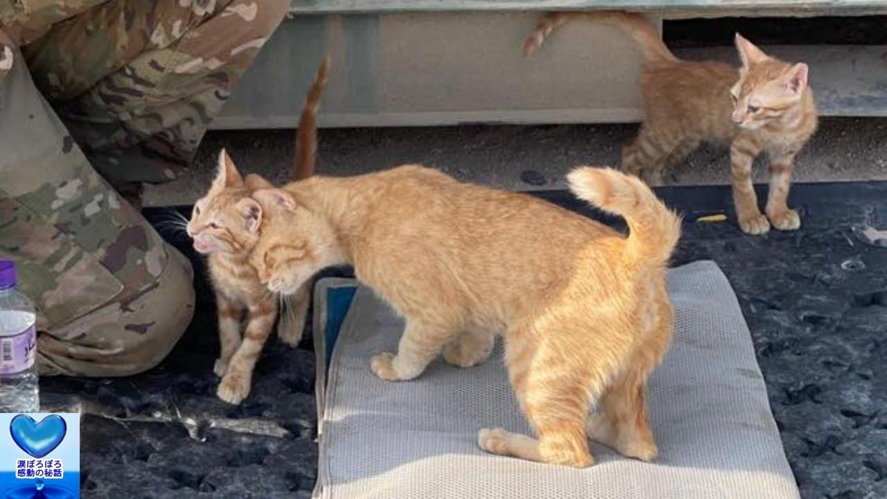 戦地で出会った野良猫の親子。兵士に癒しを与え深い絆を育んだ結果アメリカへ移送し本当の家族になることに【感動】