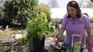 How to Start Hydrangea Bushes From Cuttings : Grow Guru