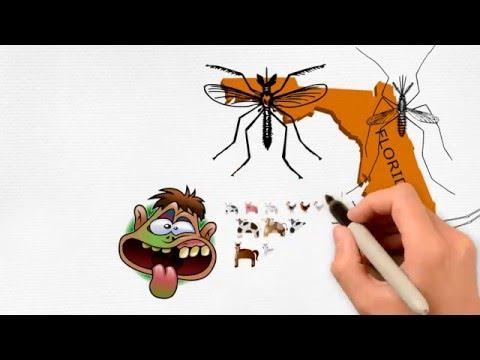 Mosquito Viruses In Florida