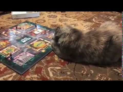 Cat Playing Clue Game - It is Mrs. White!