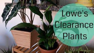 Lowe S Plant Haul Clearance Plants House Plants Youtube