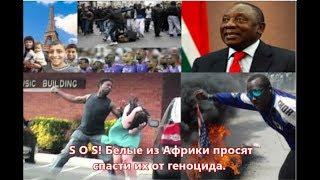 SOS! Белые из Африки просят спасти их от геноцида черных