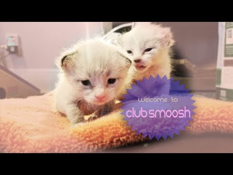 Club Smoosh Kitten Cam