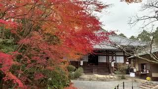 常照寺 入り口(拝観前)の紅葉  2018年11月30日 秋【京都の紅葉】