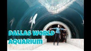 Dallas 水族館半日遊|Dallas World Aquarium ❤