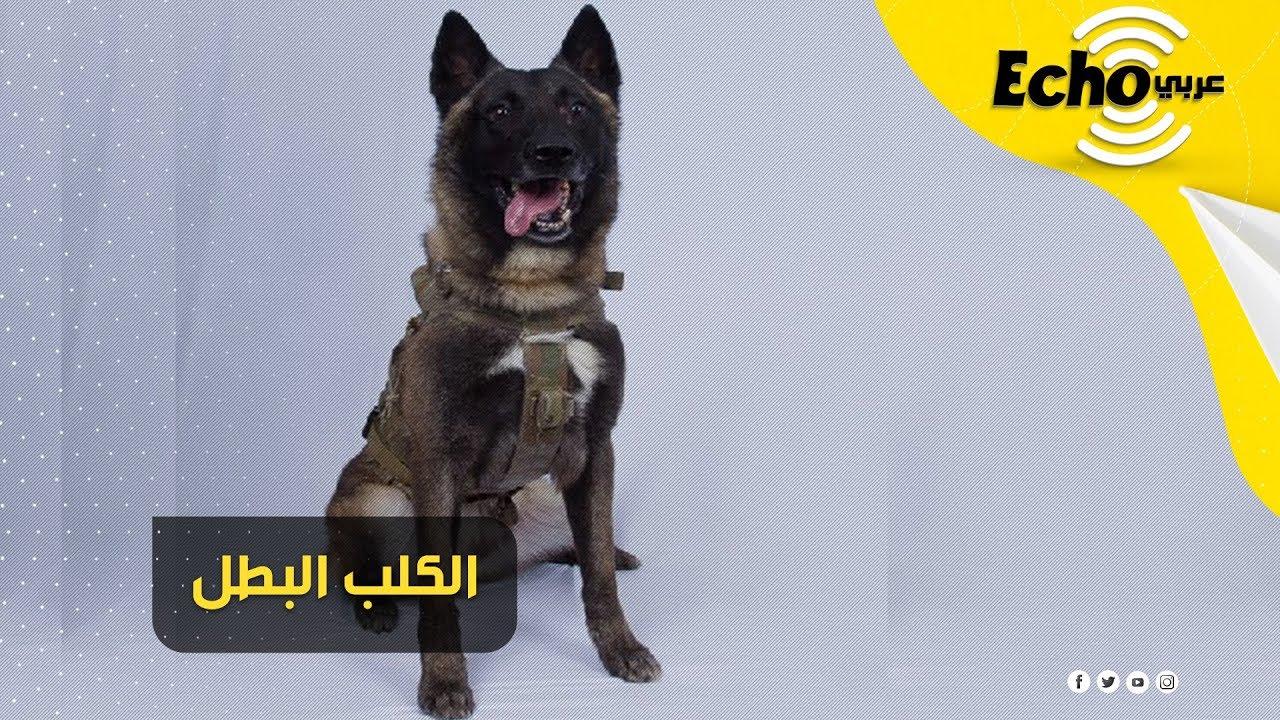 الكلب البطل الذي ساهم في قتل