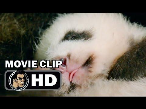 BORN IN CHINA Movie Clip - Meet Ya Ya (2017) Disney Nature Film HD