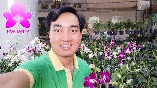 Vn Lan p Ngay Gia Trung Tm Si Gn Ca Anh Hong Gip Orchids HOALANTV