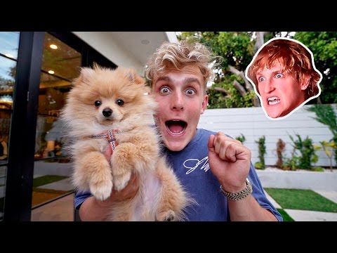 Thumbnail: I STOLE MY BROTHERS PUPPY **PRANK WARS** (HE FREAKED OUT)