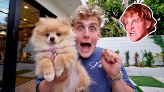 Video I STOLE MY BROTHERS PUPPY **PRANK WARS** (HE FREAKED OUT) download MP3, 3GP, MP4, WEBM, AVI, FLV Agustus 2017