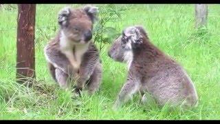 Забавные животные   смешные животное Видео Подборка