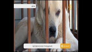 Ветеринарной службе Алматы временно запретили усыплять бродячих животных