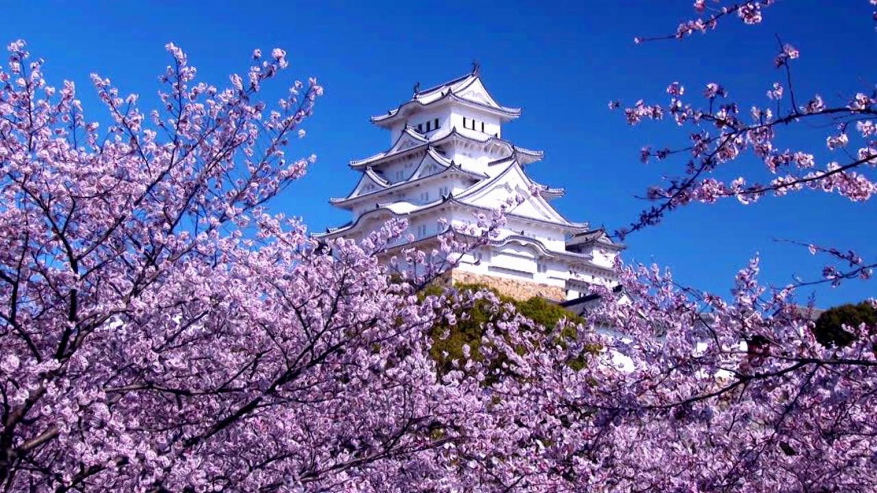 Most Beautiful Cherry Japan Hd1080p Youtube