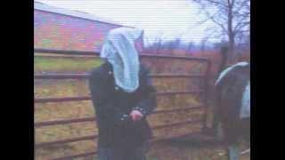 Horse Vomit