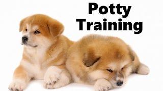 How To Potty Train An Akita Puppy - Akita House Training Tips - Housebreaking Akita Puppies Fast