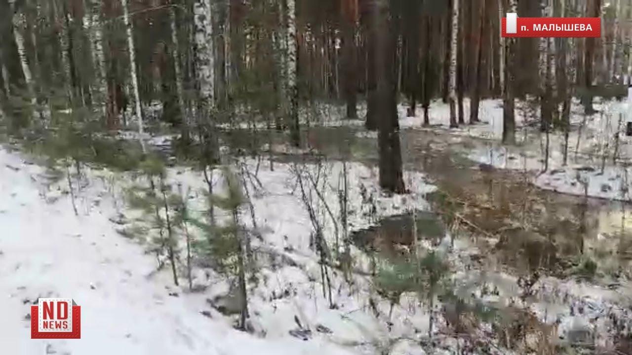 Тонны фекалий затопили лес из-за коммунальной аварии