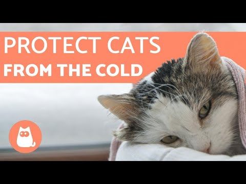 How to Protect Cats from COLD WEATHER  5 TIPS