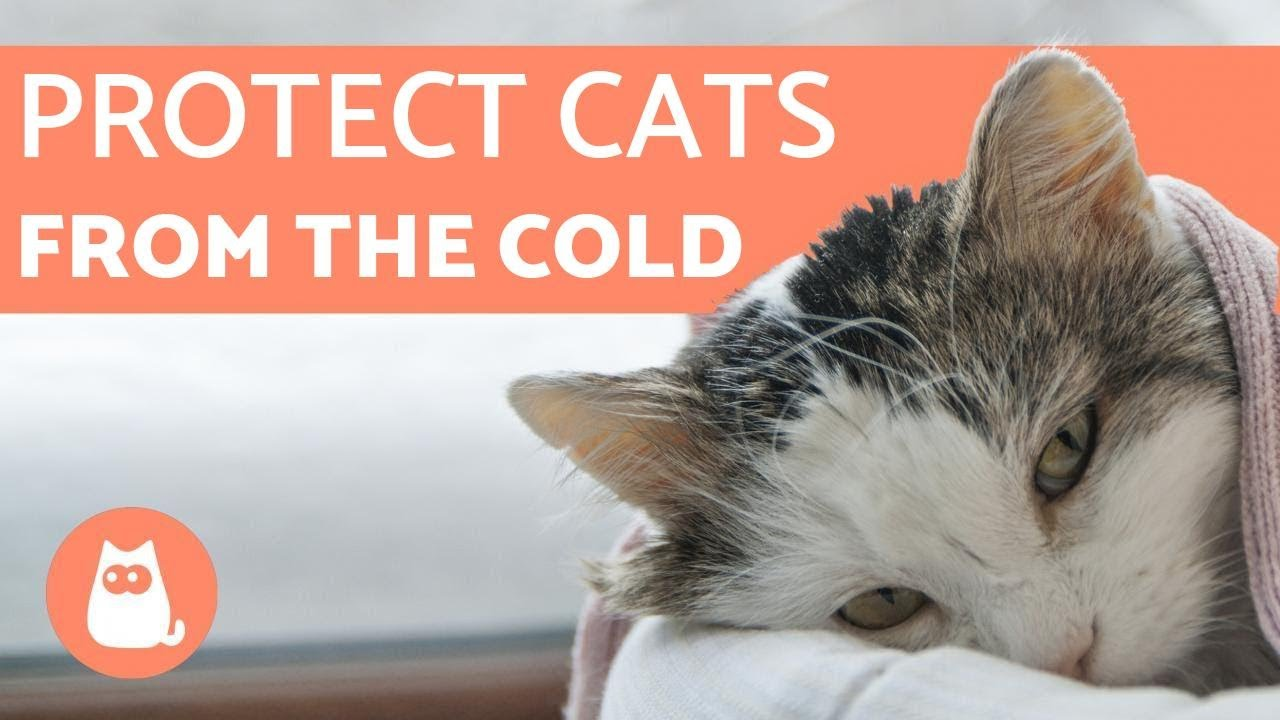 Chilly Kitties And Frigid Felines How Cold Is Too Cold For Cats Cat Checkup