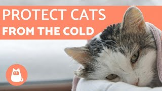 How to Protect Cats from COLD WEATHER ⛄ 5 TIPS