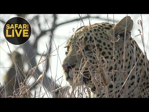 safariLIVE- Sunrise Safari - September 30, 2018