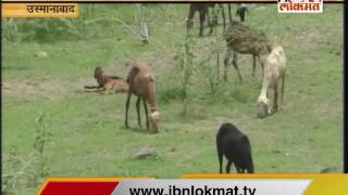 IBN Lokmat GAVAKADCHYA BATMYA 13 July 2016 (Full News Bulletin)