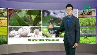 VTC14 | Thời tiết nông vụ 18/02/2018 | Hanh khô và nhiệt độ thấp bà con lưu ý che chắn cho gia cầm