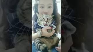 funny clips // cats and dogs funny reaction//;;;;///;;//