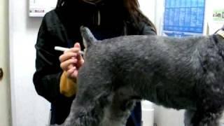 ご家庭でのペットの体温測定法。日頃から愛犬や愛猫の体温測定を練習し...