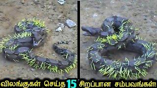 எதிரியின் பலம் தெரியாமல் மோதி  சின்னாபின்னமான 15 விலங்குகள்! | Animals Messed With Wrong Opponent