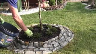 GARDEN (78) Flower arrangements - Trimming yucca and heather.