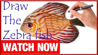 How To Draw The Zebra fish - Learn To Draw - Art Space