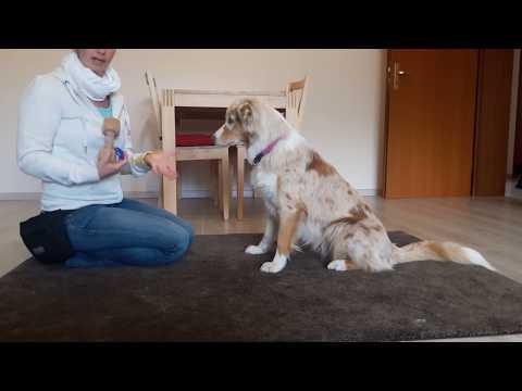 Tutorial: Hund lernt, einen Gegenstand im Maul halten / Hund etwas im Maul halten beibringen
